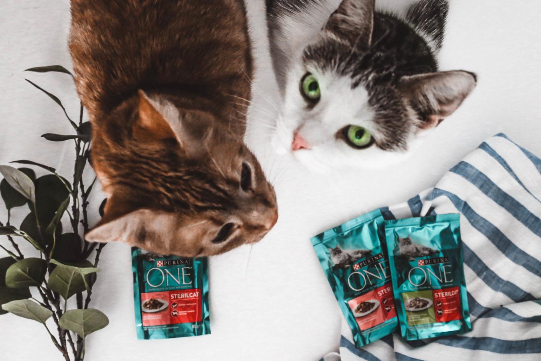 Meine große Katzenliebe und worauf ich bei der Ernährung meiner Katzen achte