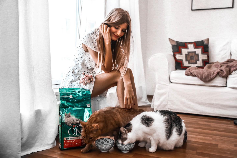 Darauf achte ich bei dem Futter von Nala und Finn – Wichtige Tipps für die richtige Ernährung von Katzen